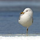Man that water is COLD!!! - Seagull by Jim Cumming