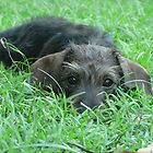 hiding in the grass by gary roberts