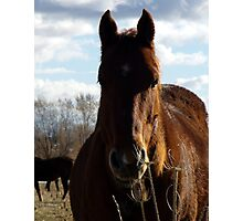 A Horse on an Fall afternoon Photographic Print