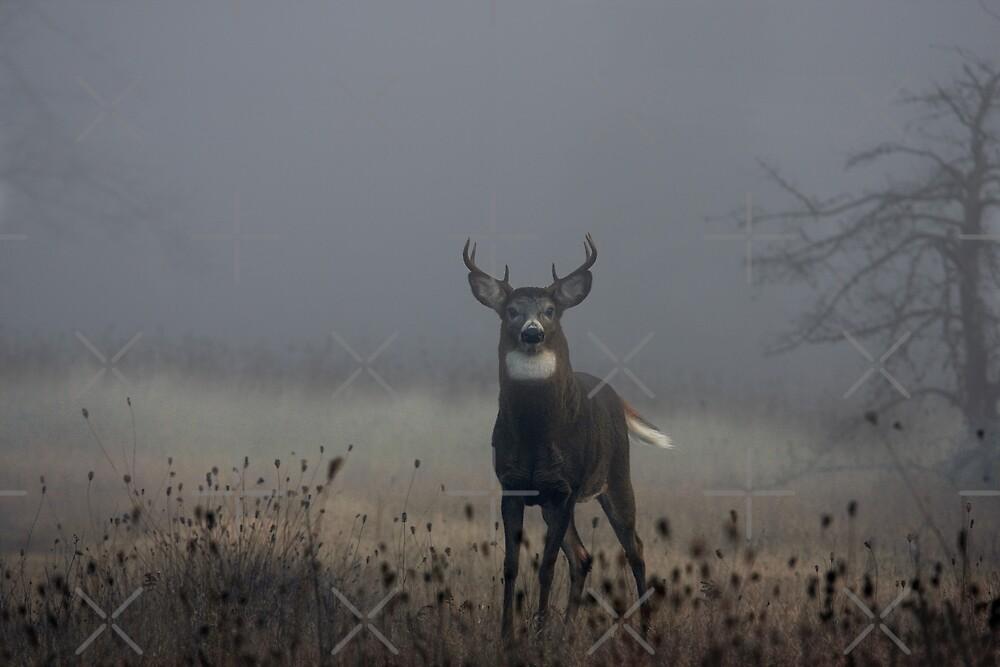 Big Buck - White-tailed Deer by Jim Cumming