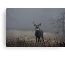 Big Buck - White-tailed Deer Canvas Print