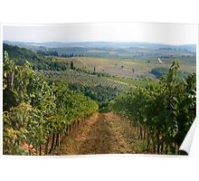 The Vineyards of Tuscany Poster