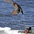What did I say? - Wood ducks by Jim Cumming