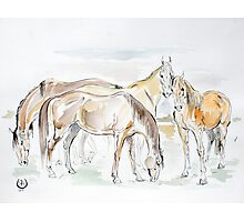 """""""Mares in the field"""" Photographic Print"""