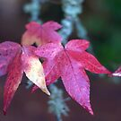 Autumn Leaves by Christopher  Boswell
