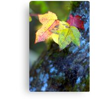 Leaves and Moss Canvas Print