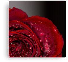 Red Rose macro 2 Canvas Print