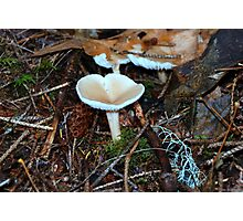 Mushroom on the Age on Youth Nature Trail Photographic Print