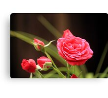 Summer Rose Canvas Print