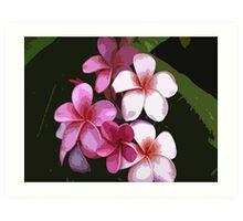 Pink Plumeria Frangipani Art Print