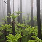 Primal mist. by Donovan wilson
