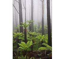 Primal mist. Photographic Print