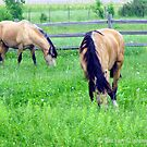 Horses from Historic Nauvoo Illinois by Jan  Tribe