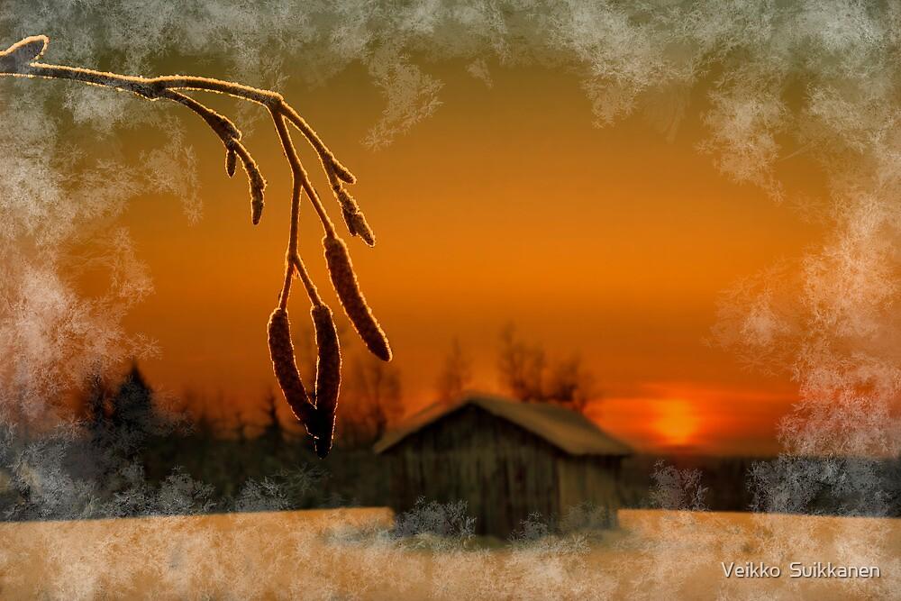 Winter evening light by Veikko  Suikkanen