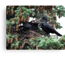 A murder of crow... Canvas Print