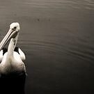 Pelican 1 by BecQuist