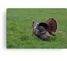 Wild turkeys Canvas Print