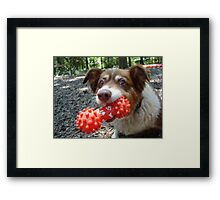 Buddy and his Dumbell Framed Print