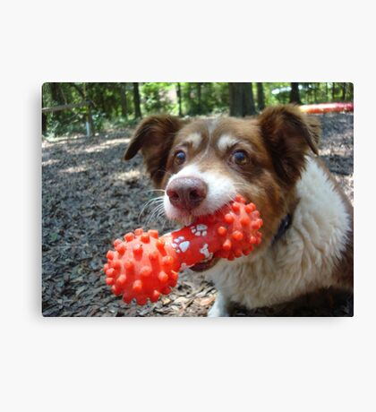 Buddy and his Dumbell Canvas Print