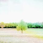 rainbow by Riko2us