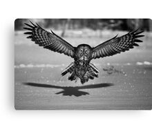 Great Grey Owl B&W Canvas Print