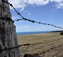 barbed wire fence by Katrina Goh