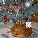 Frank Found The Best Spot For A Long Winters Nap... by Tracy Wazny