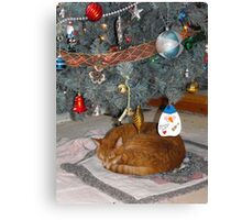 Frank Found The Best Spot For A Long Winters Nap... Canvas Print