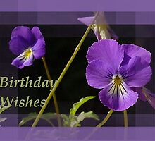 Birthday Wishes Greeeting With Viola Pansies by taiche