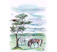 """""""Evening landscape with horses"""" Photographic Print"""