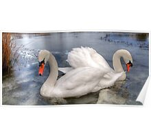 Swans in HDR Poster