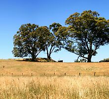 Gum Tree Hill by Stephen Mitchell