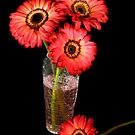 Gorgeous Gerberas by Maria Dryfhout