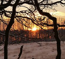 Sunrise in winter wonder land by DutchLumix