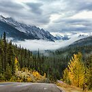 Maligne Lake Road by Amanda White