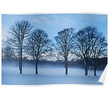 winter trees in snowscape Poster