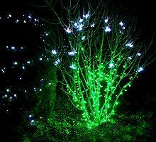 Fairy Light by Rodney Williams