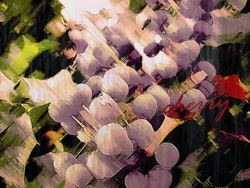 Cherry by Riko2us