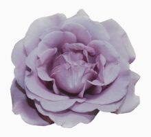 Lilac Garden Rose - Hipster/Pretty/Trendy Flowers by Vrai Chic