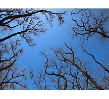 Dead trees in the environmental catastrophe Photographic Print