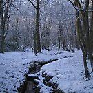 Winter Wonderland by Vicki Spindler (VHS Photography)