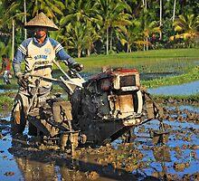 Hard work on rice paddies.... by mrLEV