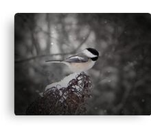 Chickadee In Snow Canvas Print