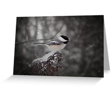 Chickadee In Snow Greeting Card