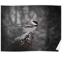 Chickadee In Snow Poster