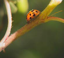 Ladybug by Lindsay Osborne