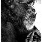 Deep Thinker by Mel Collins