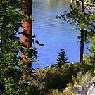"""'Tahoe Inlet"""" by Lynn Bawden"""