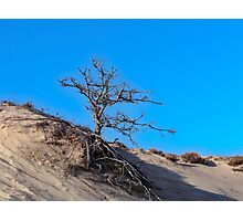 Bare in the Dunes Photographic Print