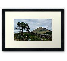 A Tree, On The Rocks Framed Print